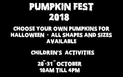 Pumpkin Fest!