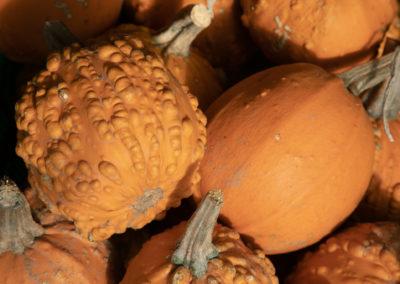 Goosebumps Pumpkins