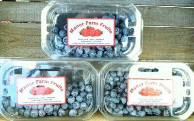 Blueberries Anyone?